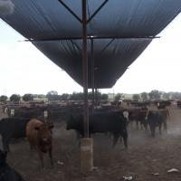 Shade Cloth Solutions